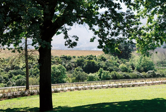 overlooking the Rust en Vrede vineyards