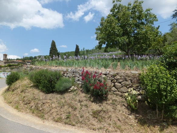 along the roadside in Chianti