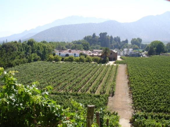 overlooking the vineyards of Errazuriz