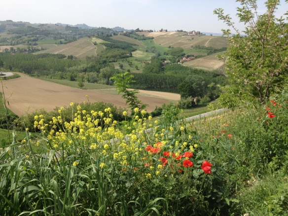 along the road to Barbaresco