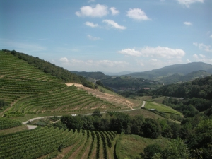 overlooking the vineyards of Talai Berri
