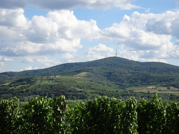 vineyards on Tokaj Hill